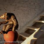 Orso sulla Palla ( Fontefante )